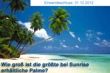Wie groß ist die größte bei Sunrise erhältliche Palme?